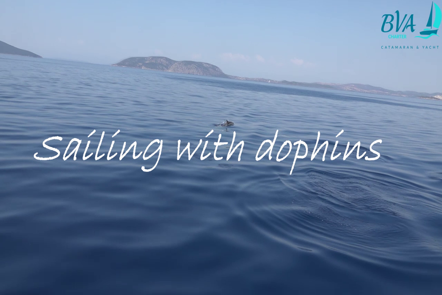Sailing with dolpnins in Greece